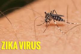 Triệu chứng và cách phòng ngừa dịch bệnh Zika